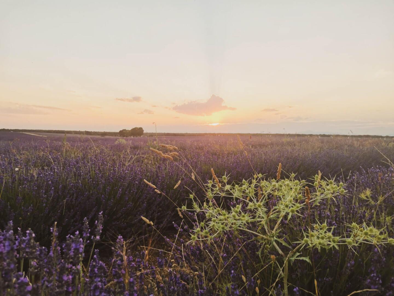 Sunsets at lavender fields Brihuega Spain