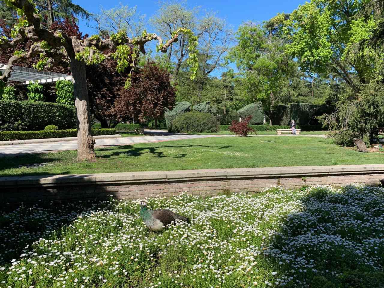 cecilio gardens retiro park